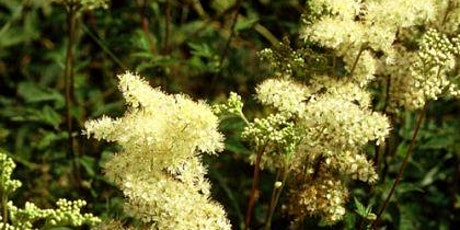 A Walk and Talk with Botanist and Herbalist Jo Goodyear tickets