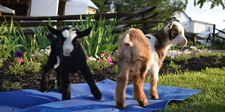 Goat Yoga at Griffin Farms tickets