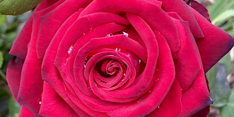 Exploring Heart Opening with Rose ~ Activating Self-love and Sovereignty tickets
