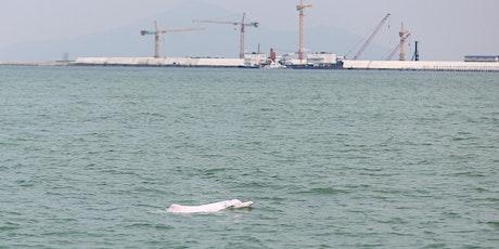 Hong Kong Dolphin Watch Tour tickets