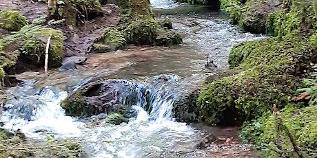 So,05.09.21 Wanderdate SingleTreff Wasser, Wald + Wiesenpfad Calw 40-65J Tickets
