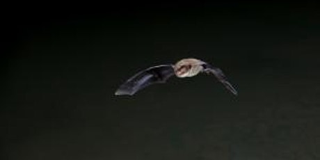 Go Batty for Bats Halloween Trail at Sutton Courtenay Monday 25 October tickets