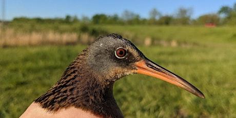 Rails: The migration of secretive birds tickets