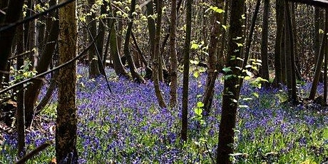Forest Bathing+ Experience - Mindfulness in Nature at Winkworth Arboretum tickets
