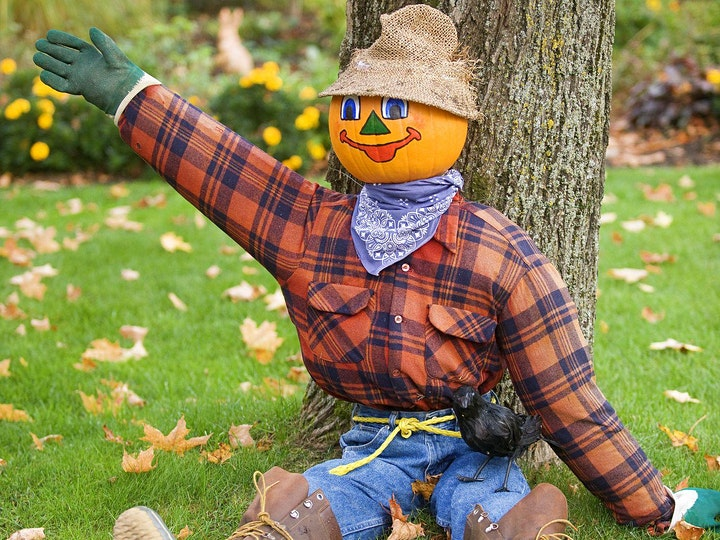 PUMPKIN PICKING and SCARECROW TRAIL to our ALPACAS image