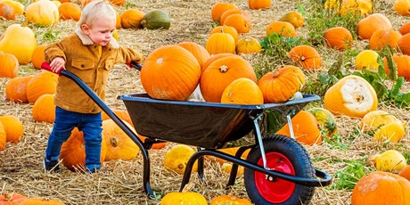 PUMPKIN PICKING and SCARECROW TRAIL to our ALPACAS tickets