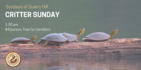Critter Sundays at Quarry Hill tickets