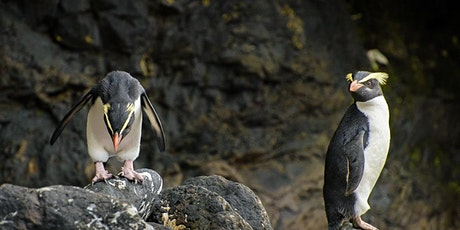 4 Day Tawaki Penguin and West Coast Wilderness Photography Experience tickets