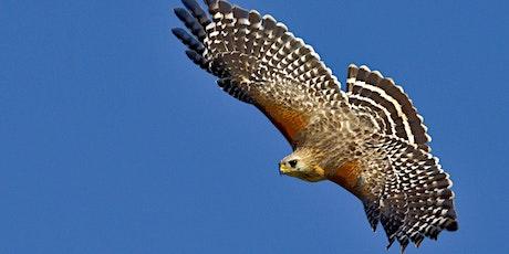 Fall Migrating Birds of Andorra tickets