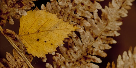 Tree ID in Autumn - Online and in-person tickets