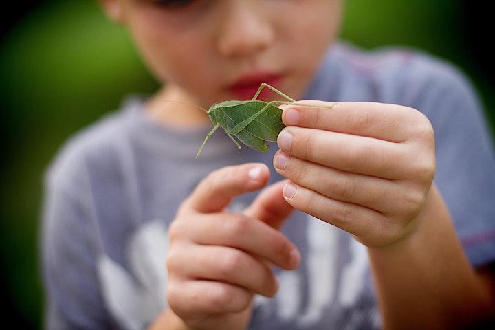 Tutorful Talks Presents Amazing Insects with Amazelab  - Free image