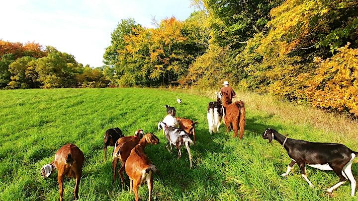 Goat Walk image