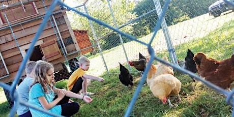 Egg Collecting at Graves Mountain Farm! tickets