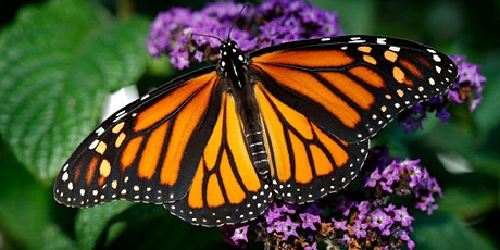 Annual Monarch Butterfly Release - Sunday 9/19 11:00 AM Session tickets