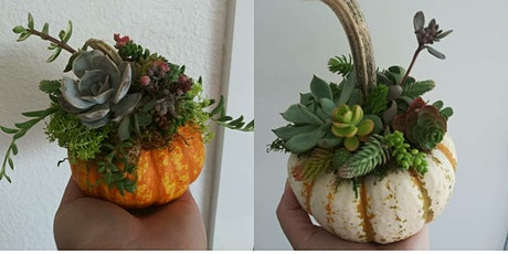 Small Succulent Pumpkin Trio Night with ReRooted tickets