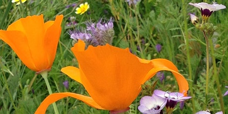 Wild by Nature: Sowing Seeds for Spring Wild Flowers with Genevieve Arnold tickets