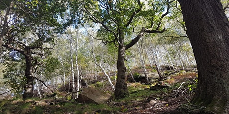 Lea Wood Nature Reserve guided walk tickets