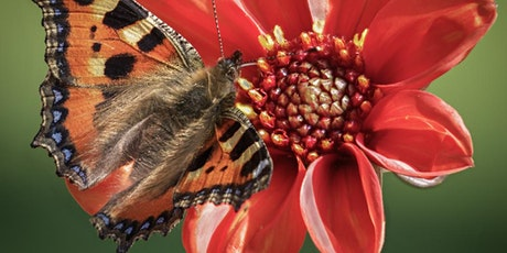 Gardening for Butterflies with Max and Christine Maughan tickets