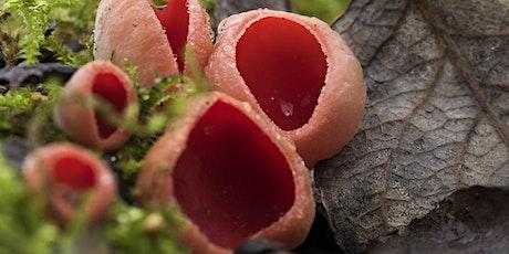 Fungi Foray tickets