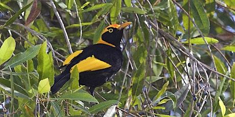 Spring bird survey - Mary Cairncross tickets