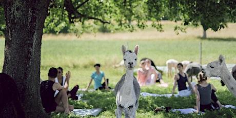Alpaka Yoga Bern Köniz billets