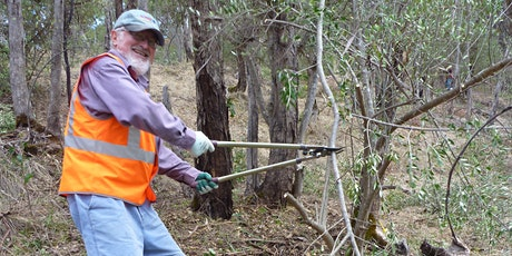 Free the Trees: Removing the olive threat to old growth gums 4th Oct tickets