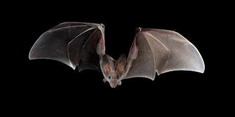 My World of Bats - Online talk tickets