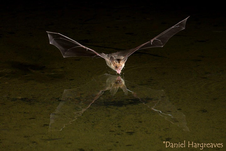 My World of Bats - Online talk image