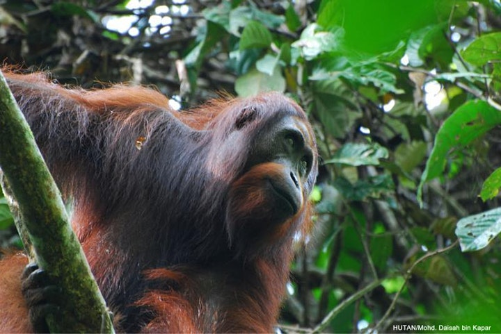 Saving Land, Saving Species! - Online Talk image