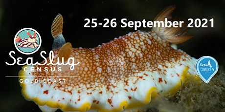Gold Coast Sea Slug Census Weekend tickets