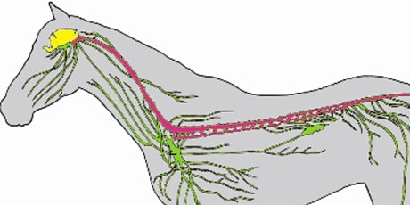 Neurophysiology: Nociception, Proprioception and Motor Control in Horses tickets