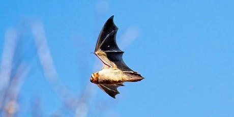 Nocturnal Creatures: Bats of Green-Wood and Gotham tickets