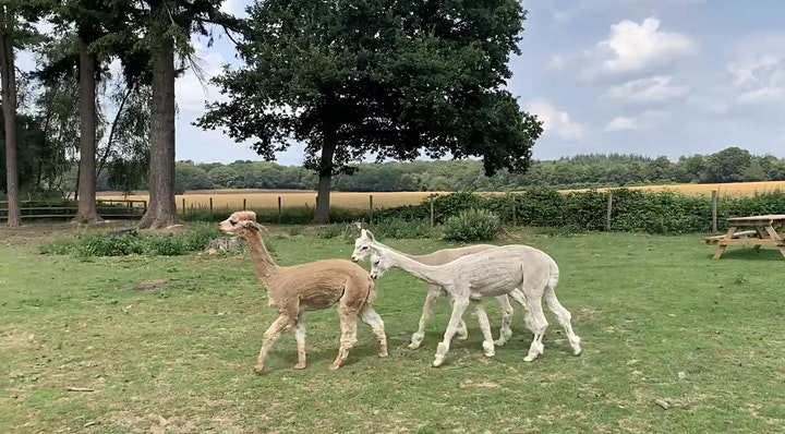 Childrens Parties - Fun on the Farm at Summer Barn - Private Hire - 2021 image
