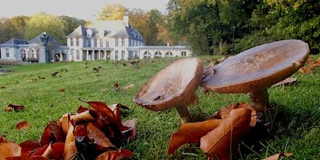 Gezwam over paddenstoelen billets