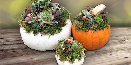 Pumpkin Succulent Workshop - Frankfort, IL tickets