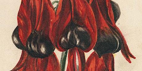 Where did Fanny de Mole prepare 'Wildflowers of South Australia'? tickets