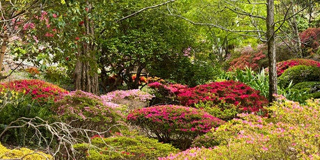 Guided Tour through Rhododendron Gully tickets