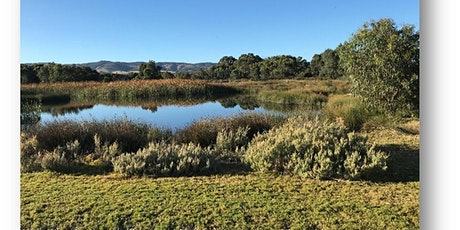 Wetlands tour - Aquatic plants discovery- by popular demand, second session tickets