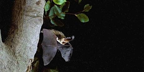 Bat Night in the SLBI Garden tickets