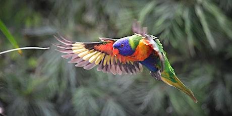 Australian Bird Song at Dawn tickets