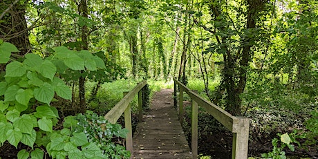 Unwind With Trees - Nature Connection and Immersion, Beddington Park tickets