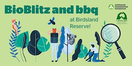 BELGRAVE, VIC: BioBlitz and BBQ at Birdsland Reserve  tickets