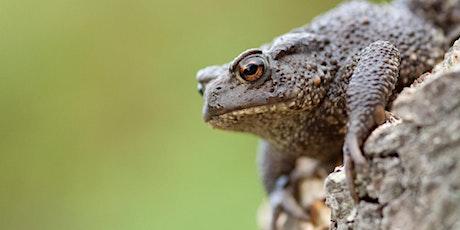 Wildlife Live Webinar - Amphibians & Reptiles (ewc 2821) tickets