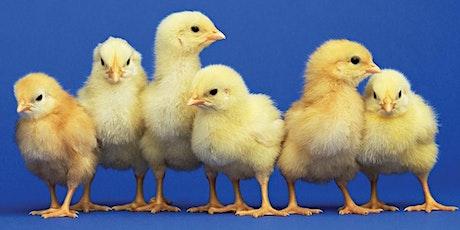ChickQuest workshop 1.26.22 tickets