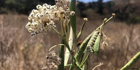 Collecting Milkweed Seed in the Santa Monica Mountains tickets
