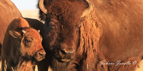 The Ecological Buffalo - On the Trail of a Keystone Species tickets