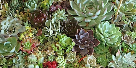 Cactus and Succulent  Society of SA - Spring Show and  SALE 2021 tickets