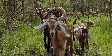 Hike with Goats! tickets