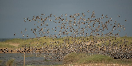 High Tide Wader Roost Experience tickets