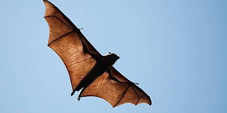 Ridge Wood Bat Walk tickets